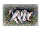 рыба наших водоёмов  Просмотров: 1987 Комментариев: 0