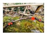Ну а что?  То же прелесть - эти весенние грибочки... :)  Просмотров: 558 Комментариев: 0