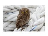 Вот такая симпатичная птичка залетела к нам на судно. Фотограф: 7388PetVladVik  Просмотров: 477 Комментариев: 3