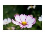 DSC03796 Фотограф: vikirin  Просмотров: 562 Комментариев: 0