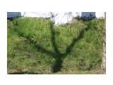 Тень... Фотограф: vikirin  Просмотров: 1552 Комментариев: 0