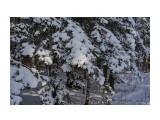 Название: _DSC0090 Фотоальбом: Зима... Категория: Пейзаж Фотограф: VictorV  Время съемки/редактирования: 2018:12:12 22:34:35 Фотокамера: SONY - DSLR-A900 Диафрагма: f/5.0 Выдержка: 1/2500 Фокусное расстояние: 500/10    Просмотров: 177 Комментариев: 0
