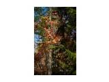 Название: _DSC9335 Фотоальбом: Осень Категория: Природа Фотограф: VictorV  Время съемки/редактирования: 2018:10:18 20:54:13 Фотокамера: SONY - DSLR-A900 Диафрагма: f/2.8 Выдержка: 1/4000 Фокусное расстояние: 500/10    Просмотров: 216 Комментариев: 0