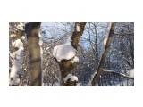 Зимние грибочки...  Фотограф: vikirin  Просмотров: 1663 Комментариев: 0