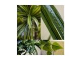 Наши искусственные растения.Заказ Фотограф: нат  Просмотров: 408 Комментариев: 0