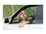 Название: Пассажир Фотоальбом: собаки Категория: Животные  Время съемки/редактирования: 2020:11:01 07:53:00 Фотокамера: Canon - Canon EOS 1200D Диафрагма: f/5.6 Выдержка: 1/1000 Фокусное расстояние: 100/1    Просмотров: 126 Комментариев: 0