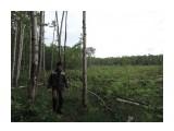 Ликвидацию леса поручили представителям ближнего зарубежья  Просмотров: 812 Комментариев: 0