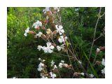 Береговые цветы.. Фотограф: vikirin  Просмотров: 3679 Комментариев: 0