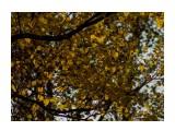 Название: 1 Фотоальбом: Южно-Сахалинск Категория: Природа Фотограф: vit781  Время съемки/редактирования: 2017:10:14 19:29:43 Фотокамера: Canon - Canon EOS 1100D Диафрагма: f/5.6 Выдержка: 1/500 Фокусное расстояние: 300/1    Просмотров: 263 Комментариев: 0