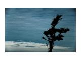 местные Фотограф: ©  marka /печать больших фотографий,создание слайд-шоу на DVD/  Просмотров: 758 Комментариев: 1