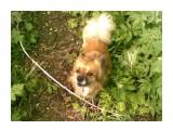 Название: Фото062 Фотоальбом: Разное Категория: Животные  Фотокамера: Nokia - Nokia N81 Диафрагма: f/3.2 Фокусное расстояние: 49/10    Просмотров: 719 Комментариев: 0