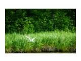 DSC09183_новый размер Фотограф: В.Дейкин  Просмотров: 1239 Комментариев: 0