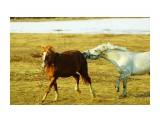 DSC06342_новый размер Фотограф: В.Дейкин  Просмотров: 705 Комментариев: 0