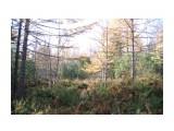 IMGP2722 Осень-Зима на Сахалине! 30.10.jpg сах Фотограф: viktorb  Просмотров: 851 Комментариев: 0