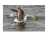 Название: кто быстрее Фотоальбом: Лебеди прилетели Категория: Животные  Время съемки/редактирования: 2013:04:27 17:02:41 Фотокамера: Canon - Canon EOS 550D Диафрагма: f/5.6 Выдержка: 1/1250 Фокусное расстояние: 120/1    Просмотров: 1172 Комментариев: 0