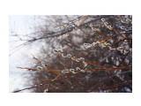 Название: На вербное Фотоальбом: ВЕСНА... Категория: Природа Фотограф: vikirin  Время съемки/редактирования: 2015:04:04 15:26:06 Фотокамера: SONY - NEX-5T Диафрагма: f/9.0 Выдержка: 1/200 Фокусное расстояние: 500/10    Просмотров: 768 Комментариев: 0
