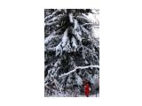 Под елкой .. елочкой.. елищей... 10 м диаметр .. Фотограф: vikirin  Просмотров: 1474 Комментариев: 0