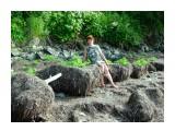Набивает траву морскую копнами.. Фотограф: vikirin  Просмотров: 3840 Комментариев: 0