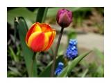 Название: DSC00286_н Фотоальбом: Цветы, деревья и травы Категория: Цветы  Время съемки/редактирования: 2017:05:21 15:58:13 Фотокамера: SONY - DSC-HX300 Диафрагма: f/6.3 Выдержка: 1/320 Фокусное расстояние: 19190/100    Просмотров: 35 Комментариев: 1