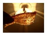 Название: Только что посушили.. гибкая. нежная, жирная, прозрачная Фотоальбом: 2015 - 2014 11 рыбалки на Лунском Категория: Рыбалка, охота Фотограф: vikirin  Время съемки/редактирования: 2015:12:06 09:18:11 Фотокамера: SAMSUNG - SAMSUNG ES15 / VLUU ES15 / SAMSUNG SL30 Диафрагма: f/3.9 Выдержка: 1/30 Фокусное расстояние: 87/10    Просмотров: 868 Комментариев: 0