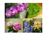 Наши искусственные растения.Заказ Фотограф: нат  Просмотров: 448 Комментариев: 0