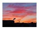 Название: 27 Фотоальбом: А из нашего окна... Категория: Природа  Просмотров: 925 Комментариев: 0