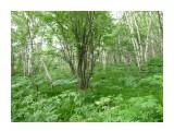 Вот так красиво в лесу! Трава, сыроешки, цветы! Но я, поймал, 2 клеща!,  Фотограф: viktorb  Просмотров: 853 Комментариев: 0