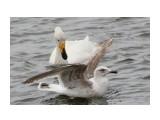 Название: птицы Фотоальбом: Лебеди прилетели Категория: Животные  Время съемки/редактирования: 2013:04:27 17:10:06 Фотокамера: Canon - Canon EOS 550D Диафрагма: f/5.6 Выдержка: 1/1600 Фокусное расстояние: 135/1    Просмотров: 1234 Комментариев: 0