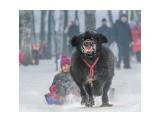 Название: Нифтяк :))) Фотоальбом: Живности. Пёсы Категория: Животные  Просмотров: 240 Комментариев: 2