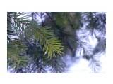 DSC05955 Фотограф: vikirin  Просмотров: 861 Комментариев: 0