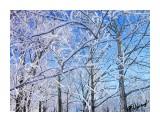 Деревья Фотограф: alexei1903  Просмотров: 1141 Комментариев: 0