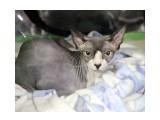 Название: Выставка Фотоальбом: выставка кошек Категория: Животные  Время съемки/редактирования: 2015:10:20 12:21:34 Фотокамера: Canon - Canon EOS 550D Диафрагма: f/5.0 Выдержка: 1/60 Фокусное расстояние: 55/1    Просмотров: 358 Комментариев: 0