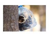 Белка в душе тоже птичка ))) Фотограф: VictorV  Просмотров: 411 Комментариев: 1