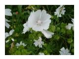Цветочная поляна! Фотограф: viktorb  Просмотров: 976 Комментариев: 0