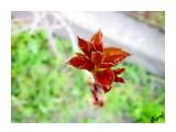 Рождения жизни Фотограф: alexei1903  Просмотров: 1032 Комментариев: 0