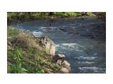 Речки весенние... воды снежные... Фотограф: vikirin  Просмотров: 1801 Комментариев: 0