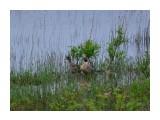 Название: шилохвость Фотоальбом: дичь какая Категория: Природа  Время съемки/редактирования: 2021:06:12 14:37:57 Фотокамера: NIKON CORPORATION - NIKON D5100 Диафрагма: f/6.3 Выдержка: 10/16000 Фокусное расстояние: 6000/10    Просмотров: 42 Комментариев: 0