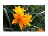 Цветы прибрежные щедры на красоту.. Фотограф: vikirin  Просмотров: 1296 Комментариев: 0