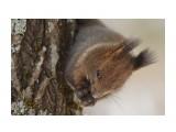 Охота на белку )) 3 Фотограф: VictorV  Просмотров: 456 Комментариев: 0