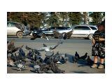 Название: Голуби Фотоальбом: Южно-Сахалинск Категория: Сюжет  Просмотров: 1835 Комментариев: 0