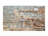 Название: чечетка Фотоальбом: Охотское Категория: Природа Фотограф: Tsygankov Yuriy  Время съемки/редактирования: 2021:03:24 17:33:00 Фотокамера: Canon - Canon EOS 6D Диафрагма: f/6.3 Выдержка: 1/800 Фокусное расстояние: 500/1    Просмотров: 260 Комментариев: 0