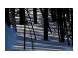 В весеннем лесу Фотограф: vikirin  Просмотров: 709 Комментариев: 0
