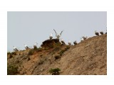 Поделили высотку.. Фотограф: vikirin  Просмотров: 1944 Комментариев: 0