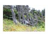 Ветренный лес... Фотограф: vikirin  Просмотров: 1937 Комментариев: 0