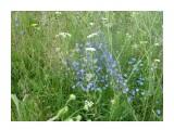 Голубой лужок! Фотограф: viktorb  Просмотров: 623 Комментариев: 0
