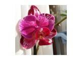 Мое орхидейное богатство  IMG_20170103_131633_912   Просмотров: 69  Комментариев: 0
