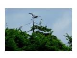 DSC00868q_новый размер Фотограф: В.Дейкин  Просмотров: 1326 Комментариев: 1