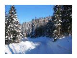 Лесовозная дорога Фотограф: vikirin  Просмотров: 4485 Комментариев: 0