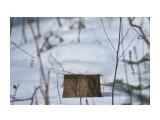 Название: Грибок ) Фотоальбом: Зима... Категория: Природа Фотограф: VictorV  Время съемки/редактирования: 2019:01:26 21:53:54 Фотокамера: SONY - DSLR-A900 Диафрагма: f/5.6 Выдержка: 1/3200 Фокусное расстояние: 4000/10    Просмотров: 129 Комментариев: 0