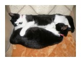 Бася и Мася спят валетом.  Просмотров: 484 Комментариев: 0